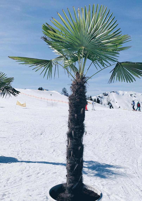alleen op wintersport